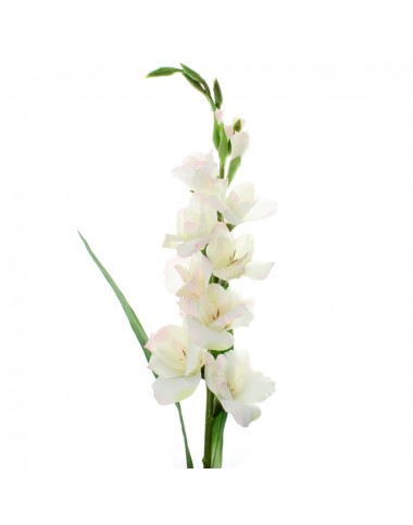 White Gladiolus ( Long Stem )