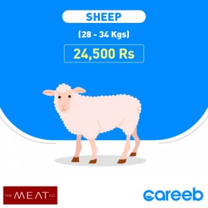 Fat-tailed Sheep (دنبہ)